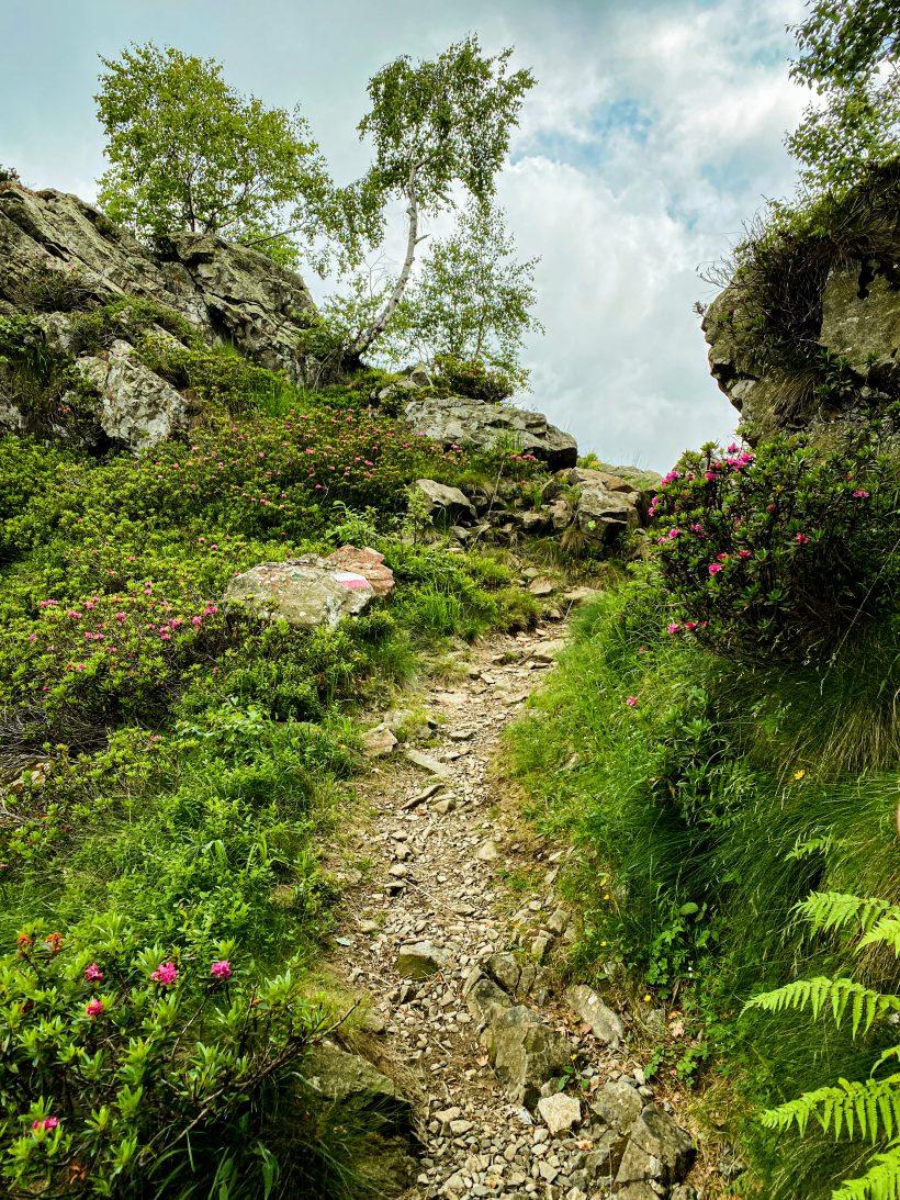 Un sentiero nell'oasi zegna per un trekking iper locale